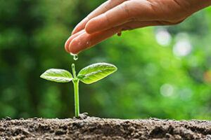 How to Manifest Positive Energy positive seeds grow into positive plants
